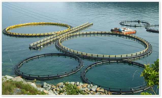 reduce marine fouling and fish lice in fish farms