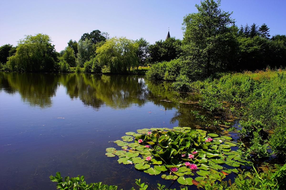 algae elimination in lakes reservoirs