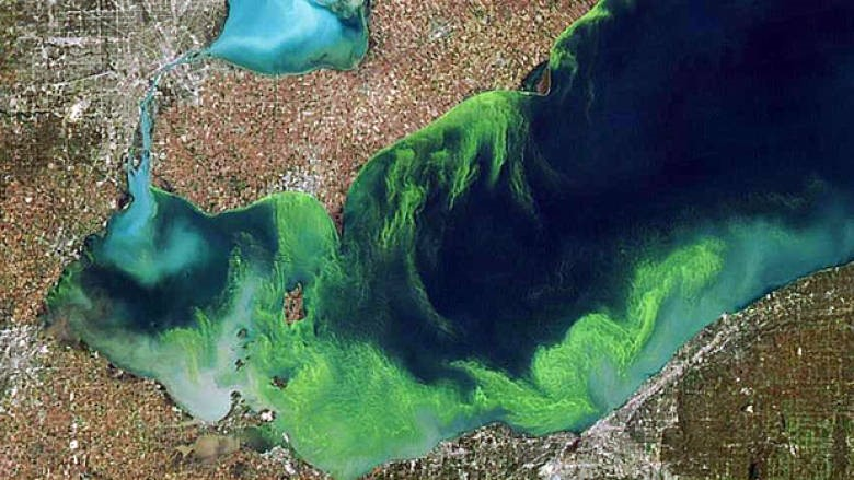 How to get rid of blue green algae in lakes